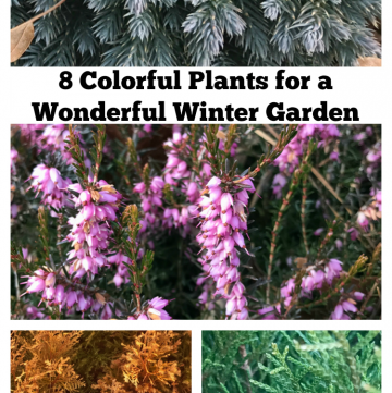 Colorful Plants for a Wonderful Winter Garden