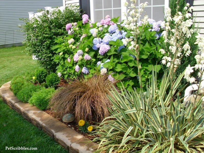 How to plan your dream front yard! (And how we went grass free!)