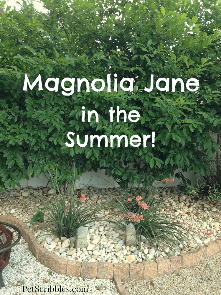 Magnolia Jane In The Summer Pet Scribbles