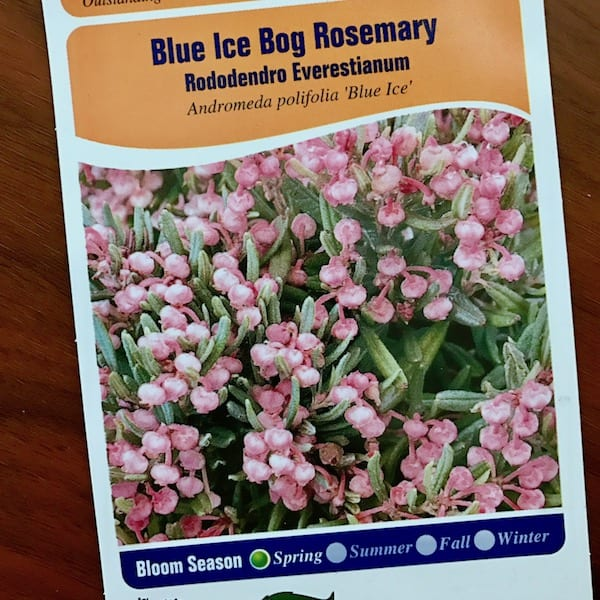 Blue Ice Bog Rosemary plant tag