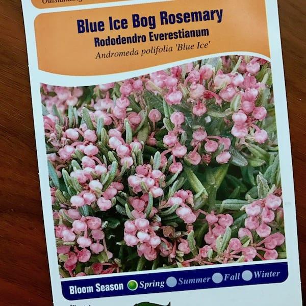 Blue Ice Bog Rosemary plant tag