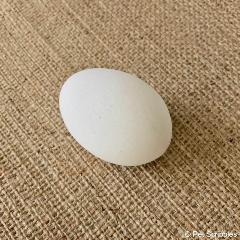 eggnots egg