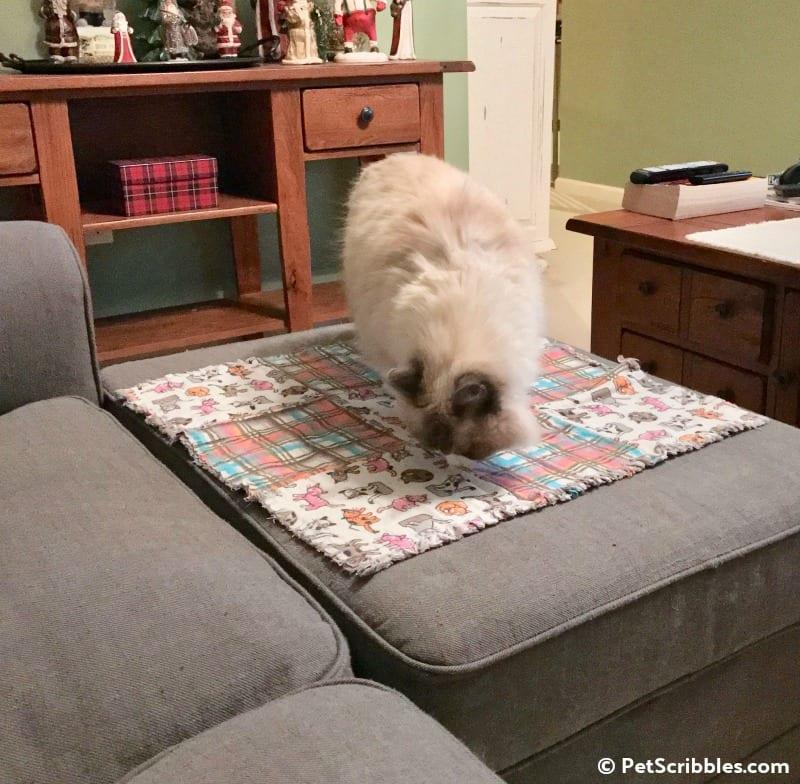Lulu explores her new blanket