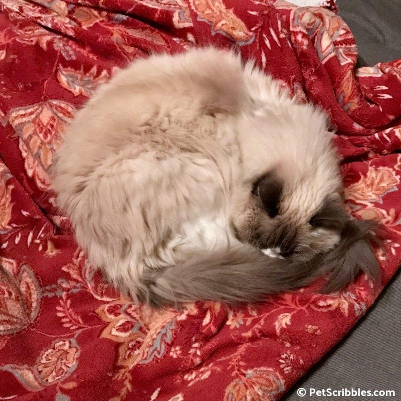 Lulu on her red blanket
