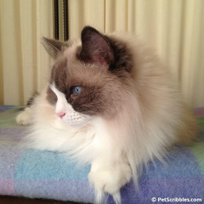 Lulu on her wool blanket