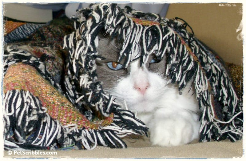 Lulu under her blanket