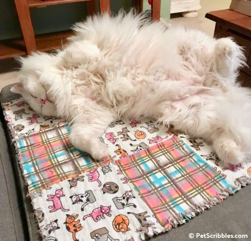 Otto on Lulu's new blanket