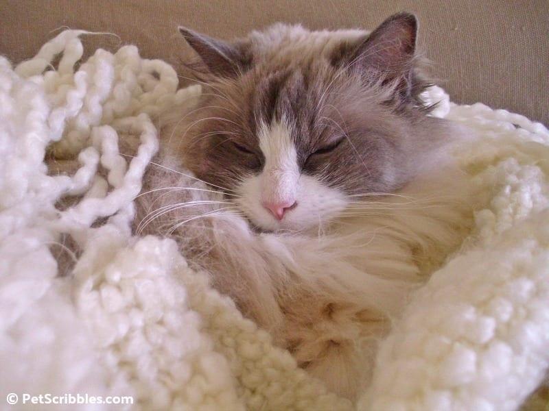 Sleepy Lulu