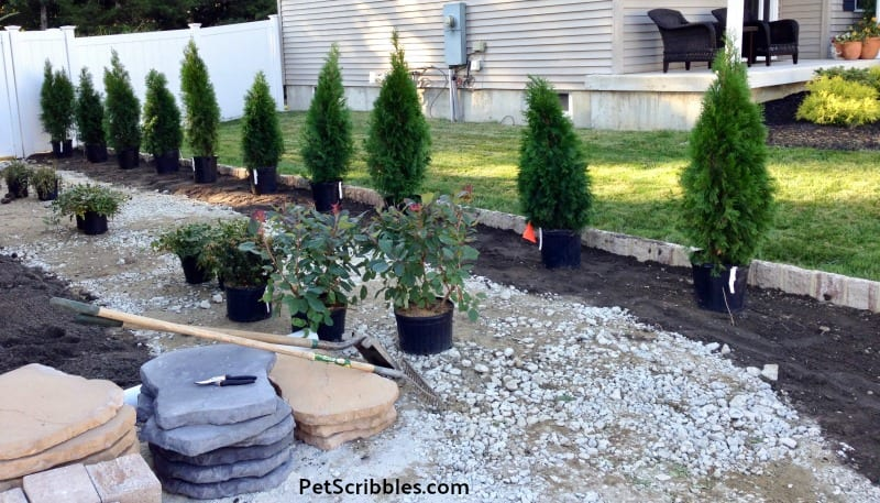 choosing side yard shrubs