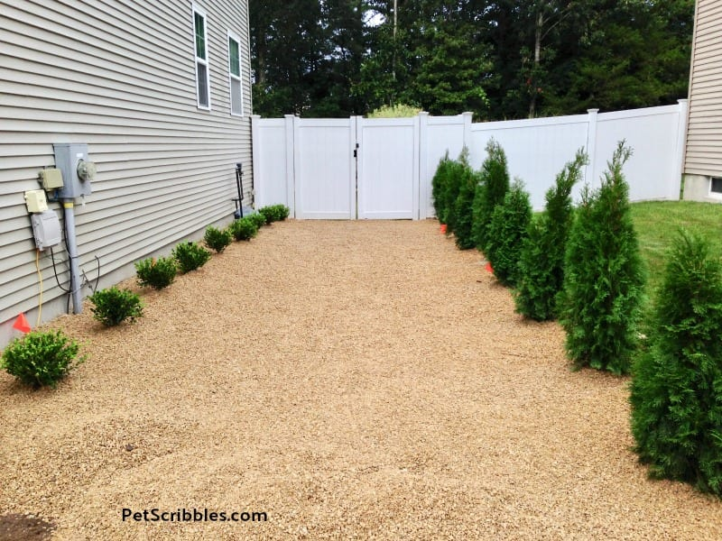 evergreen shrubs for side yard