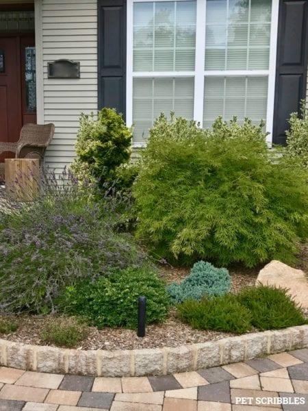 Evolution of a Garden Bed - Front Entrance