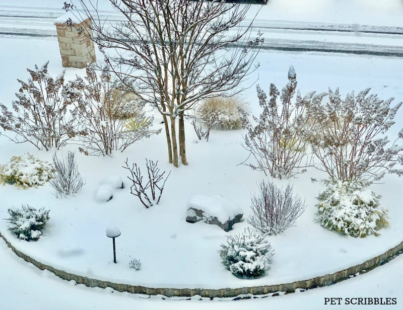 Snow-covered garden bed in Winter