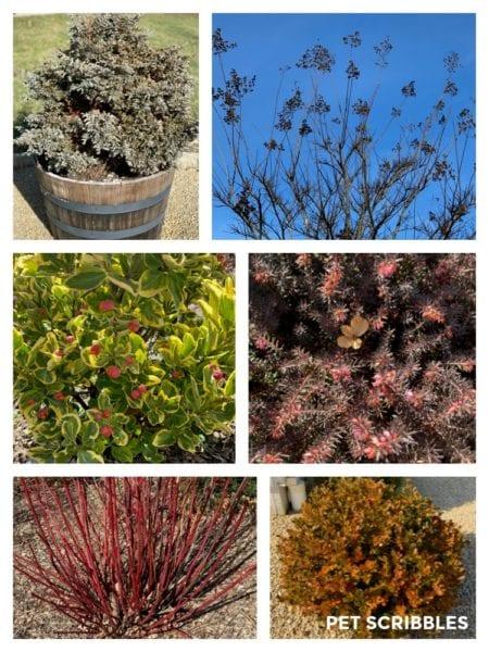 Winter Interest in the January Garden