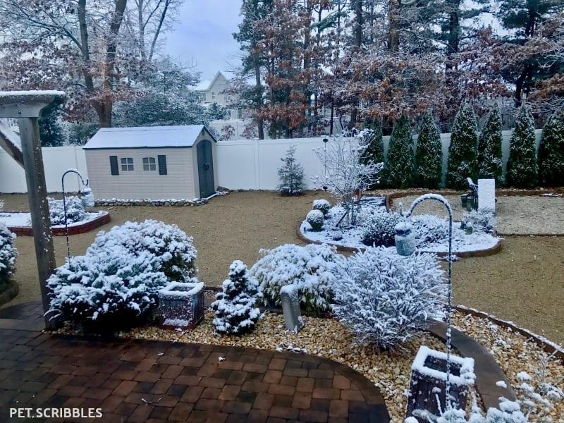 Pretty Backyard in Winter