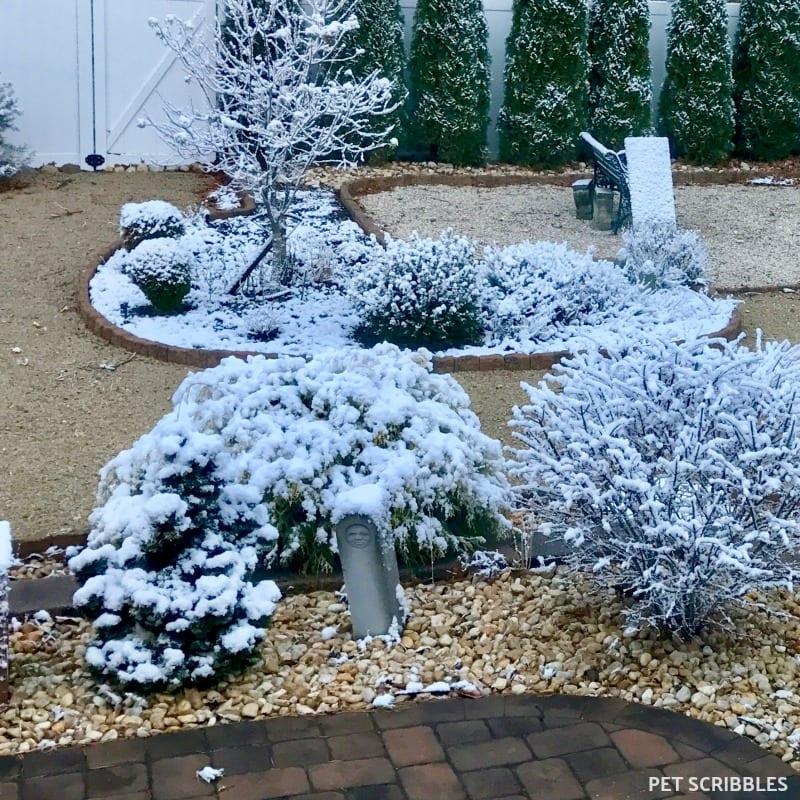 Winter interest in backyard