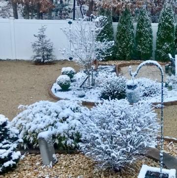 Winter stillness in the garden