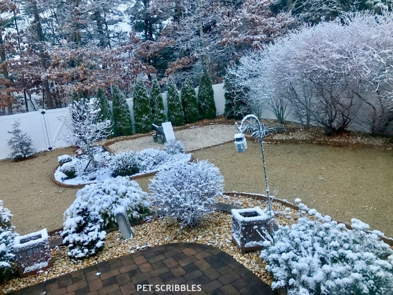 beautiful Winter garden with snow