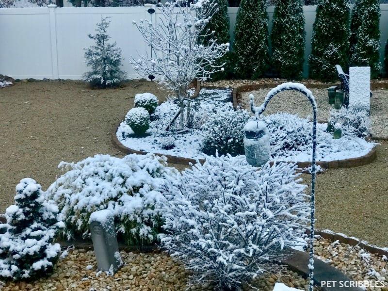 enchanting Winter garden with snow