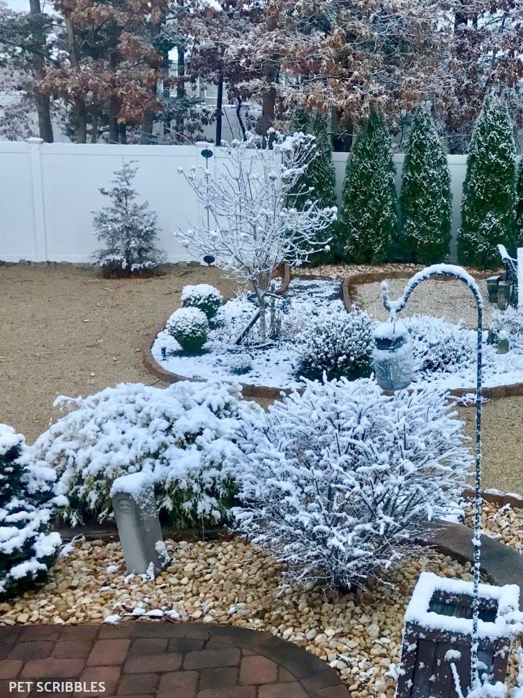 enchanting Winter stillness in the garden