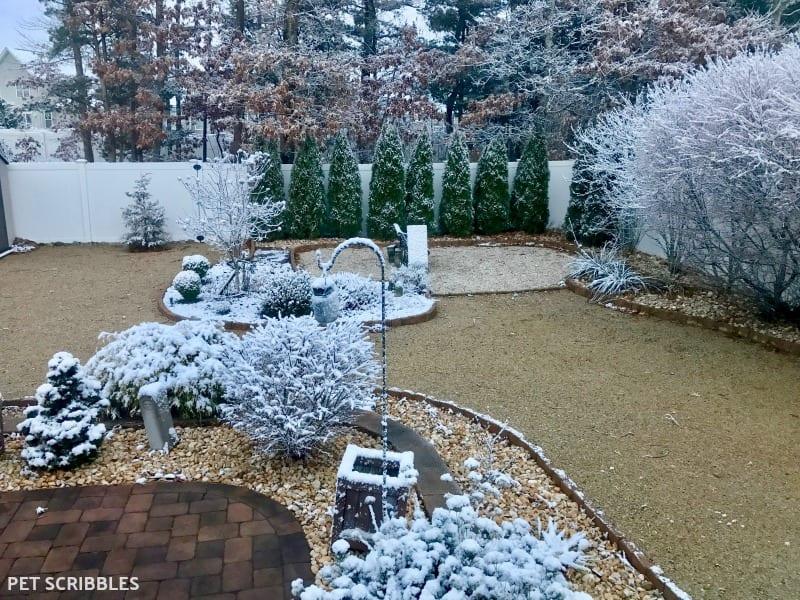 serene Winter stillness in the garden