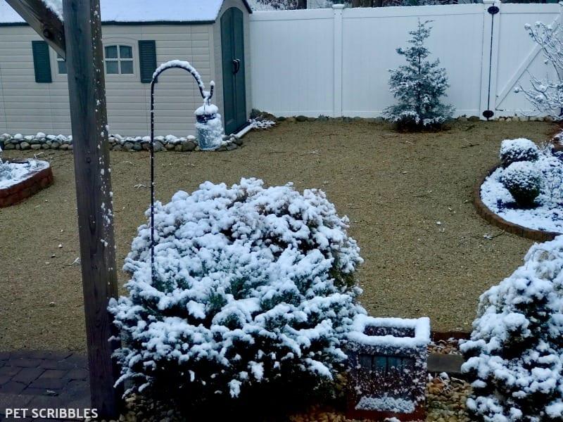 snow-covered shrubs