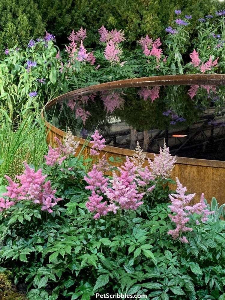 Astilbe in bloom at 2019 Philadelphia Flower Show