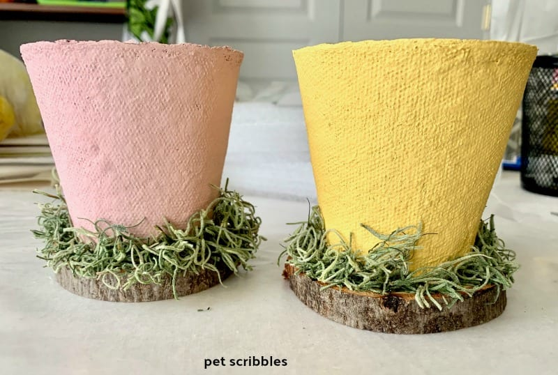 Easter peat pots with Spanish moss around base
