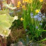 Marching into the Garden with Signs of Early Spring
