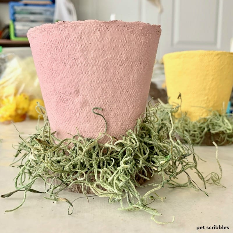 Spanish moss for peat pot crafts