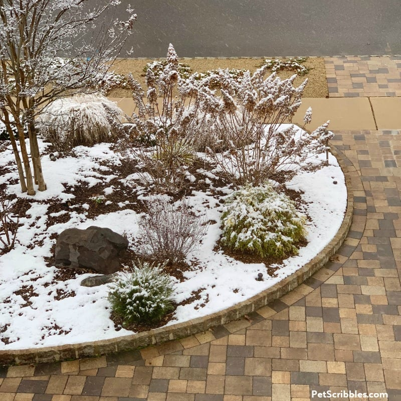 early Winter snow on garden bed