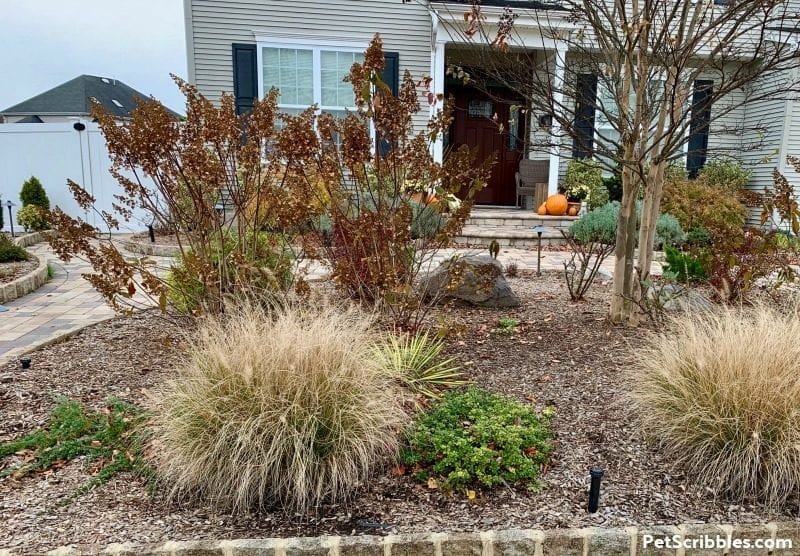 late November front yard garden bed