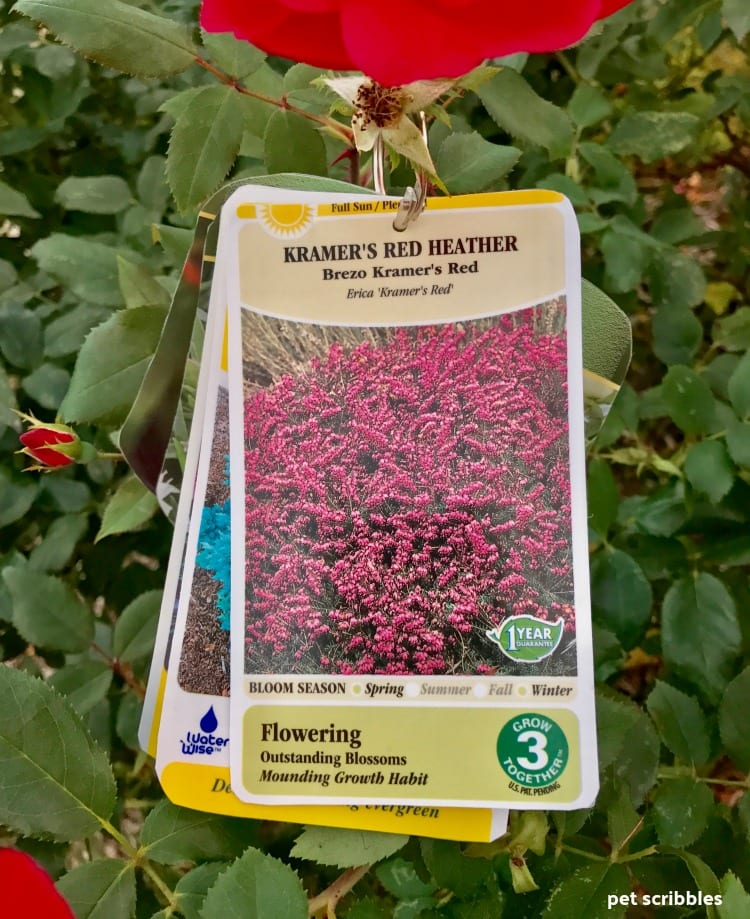 Kramer's Red Heather plant tag