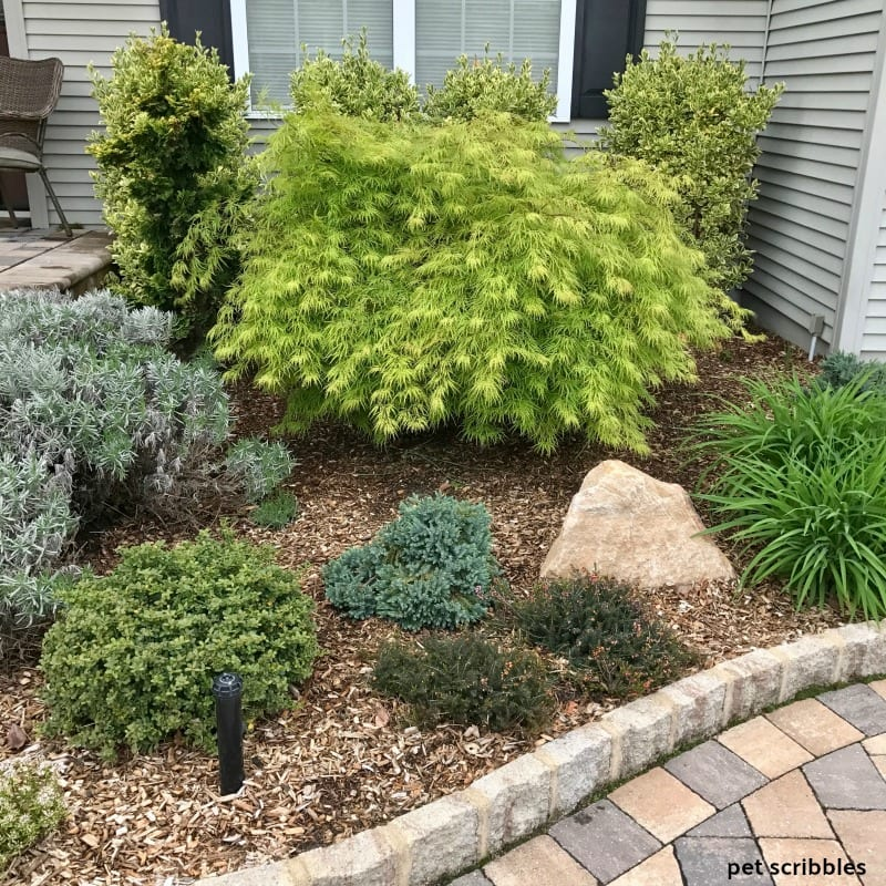 front entrance garden bed filled with different shades of green