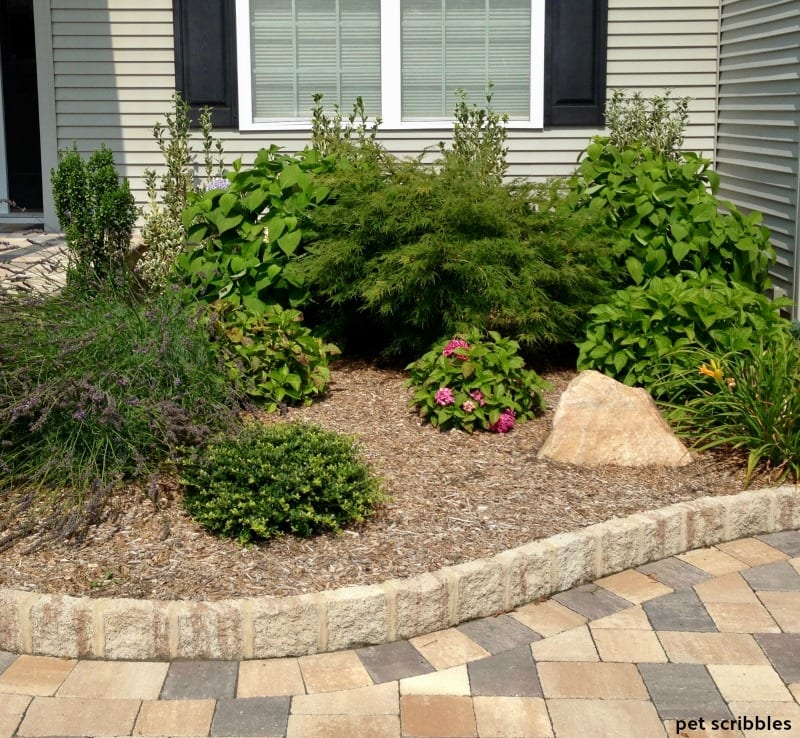 front entrance garden bed in Summer