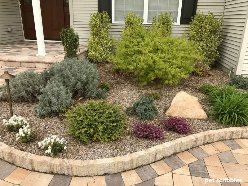 front entrance garden with blooming Candytuft and Kramer's Red Winter Heath