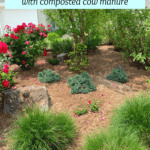 Improve Soil Quality with Composted Cow Manure