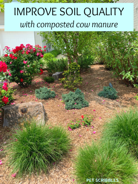 how to improve soil quality with composted cow manure