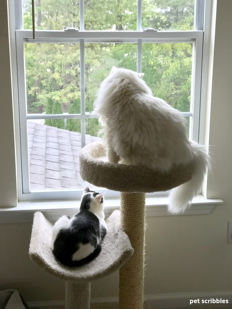 Ivan and Otto looking out the window together