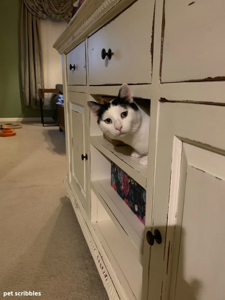 Ivan peeking out of the furniture
