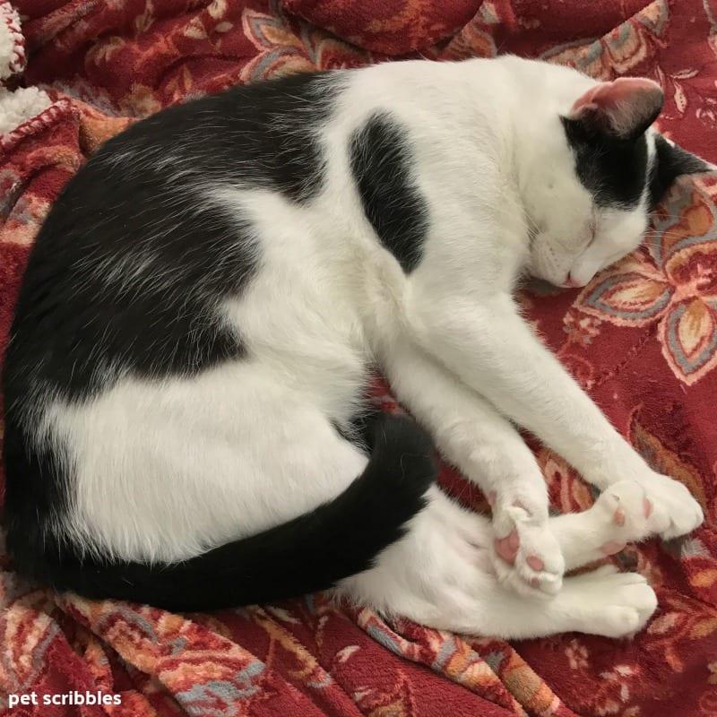 Ivan sleeping on Lulu's blanket