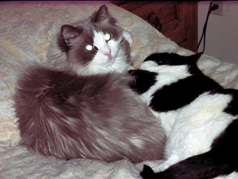 Matisse blind cat being comforted by Aliza cat