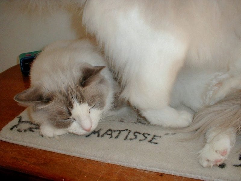 Matisse the cat and his mat