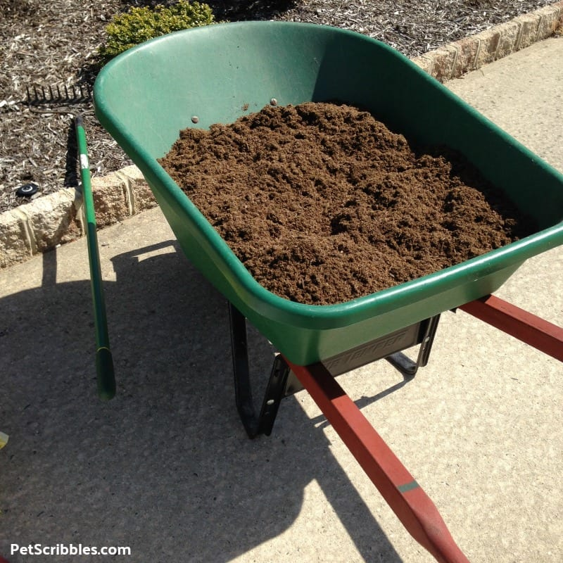 composted cow manure in wheelbarrow