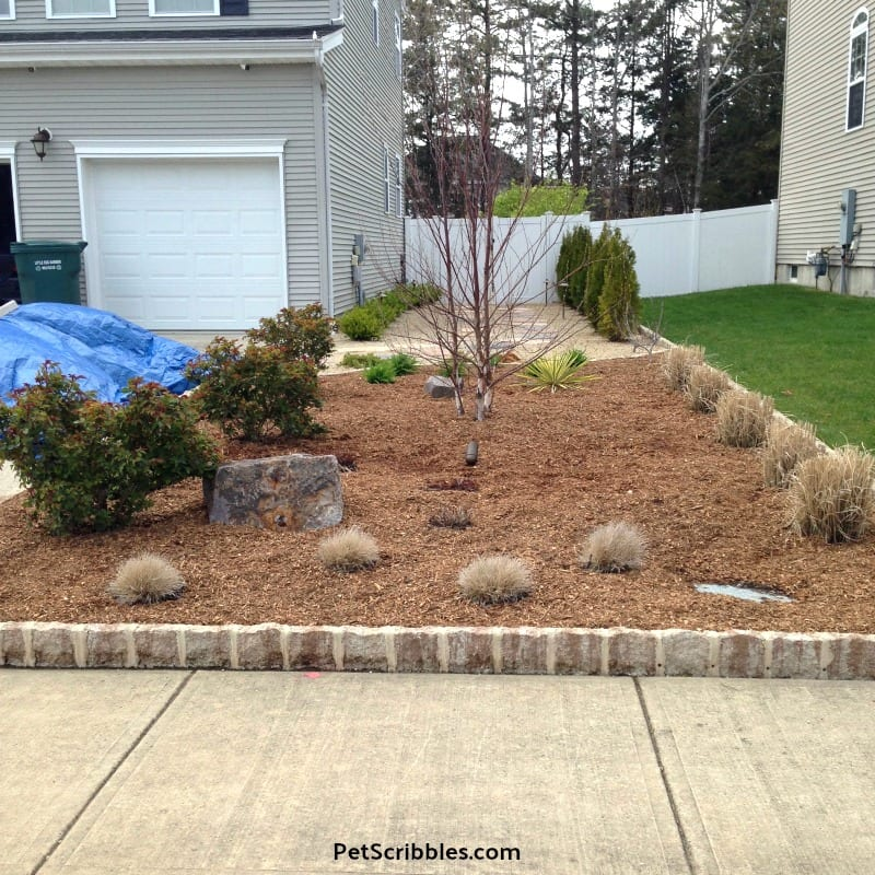 large garden bed in early Spring with fresh mulch added over composted cow manure