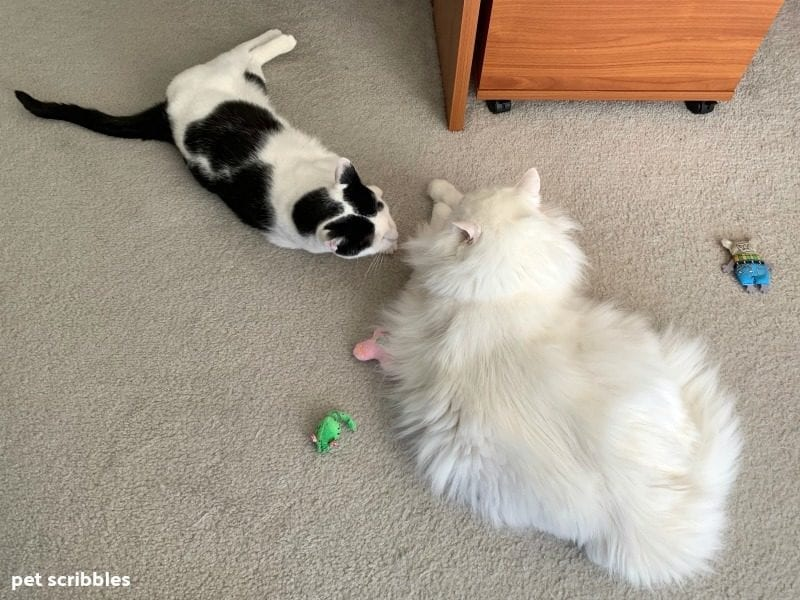 two cats with their toys on the floor