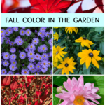 How to get brilliant Fall color in your garden: Part One