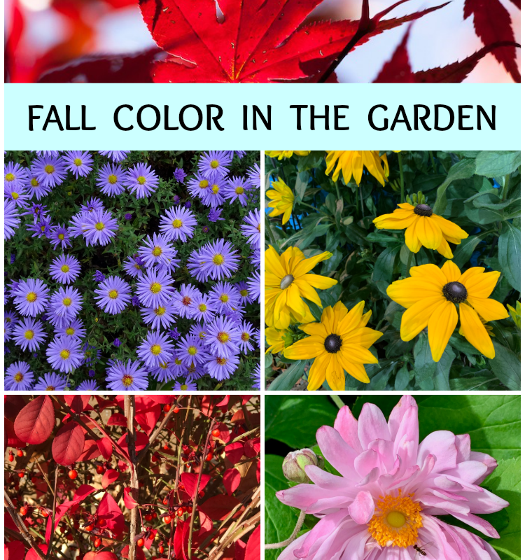 Fall Color in the Garden