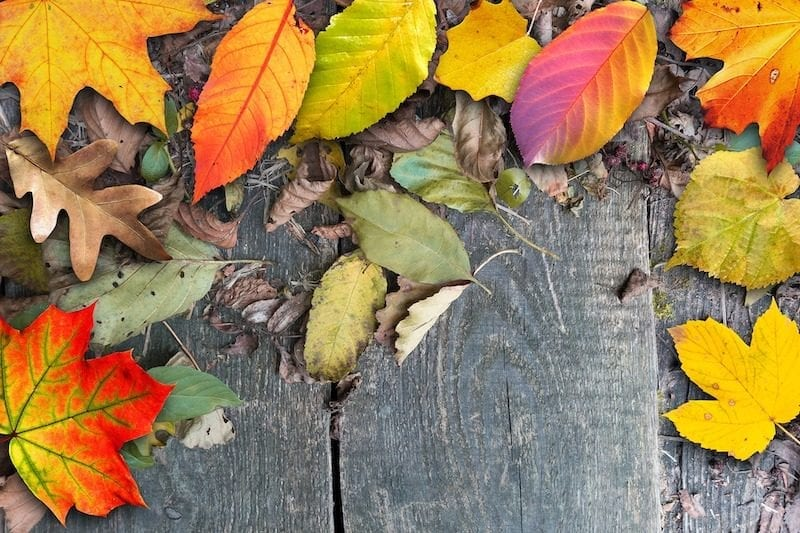 autumn leaves in many colors and shapes