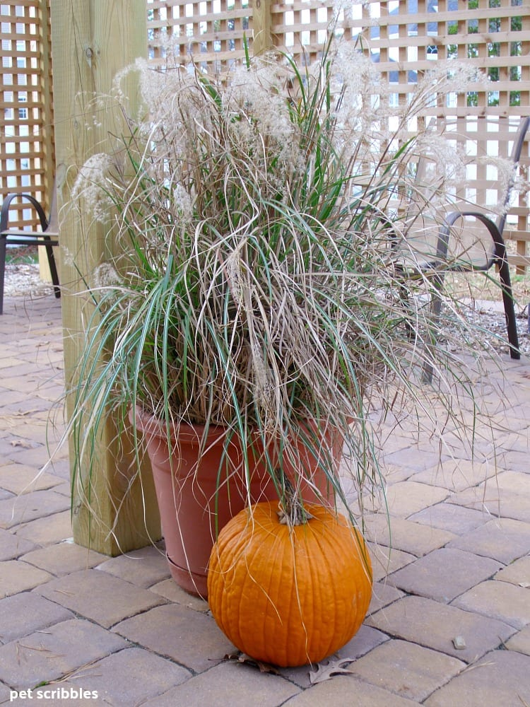 large ornamental grasses in a pot with a pumpkin