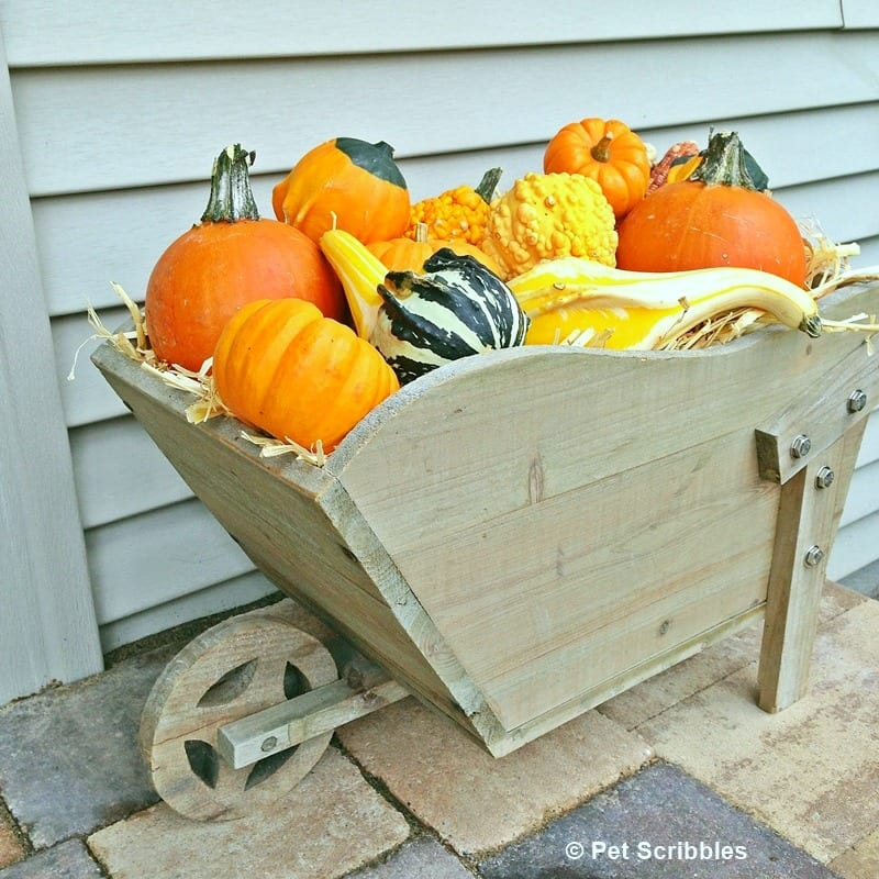 small wheelbarrow with hay and colorful gourds